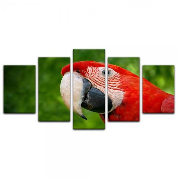 Leinwandbild - Roter Papagei II