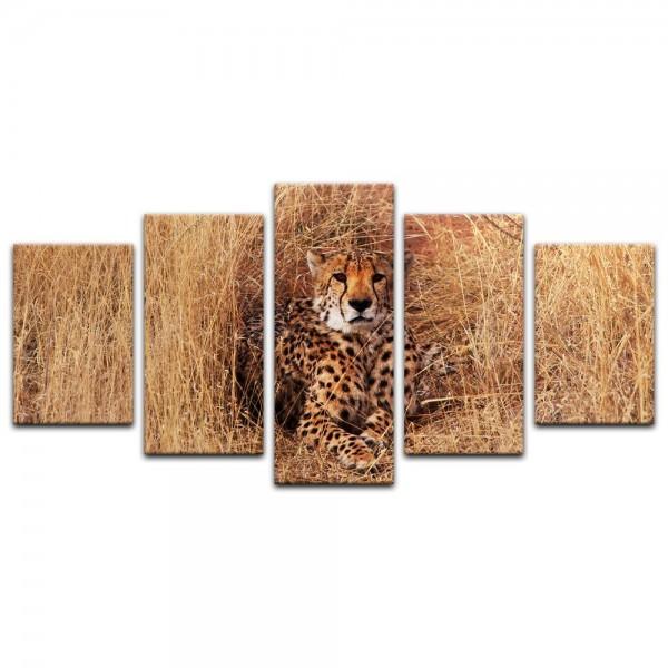 Leinwandbild - Gepard