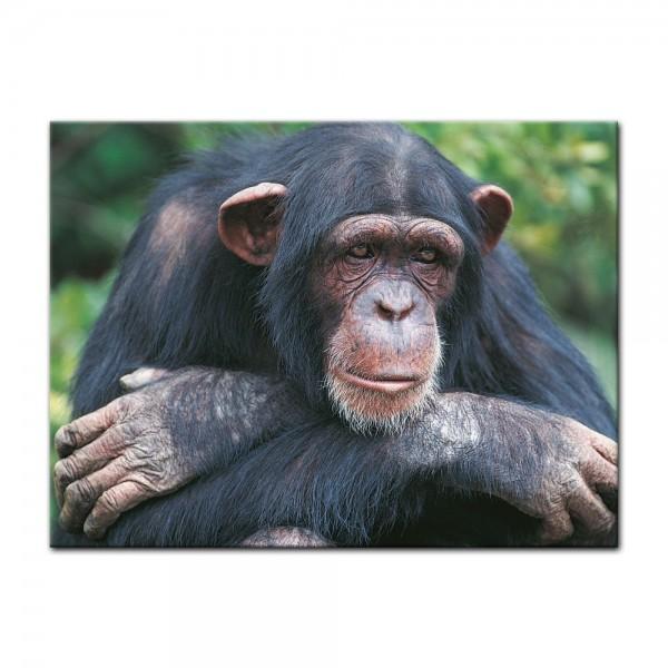 Leinwandbild - Schimpanse