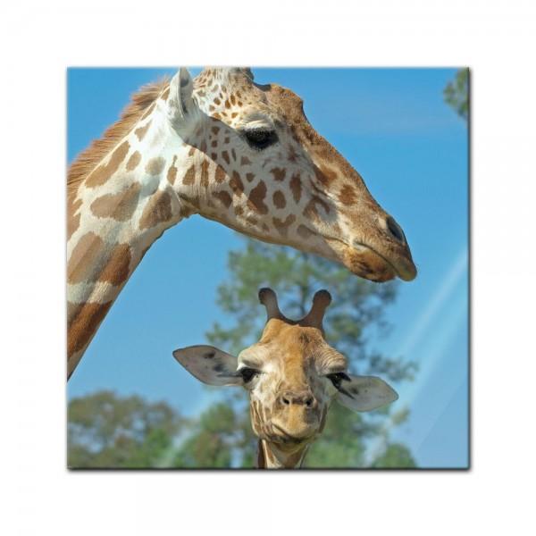 Glasbild - Mutter und Baby Giraffe