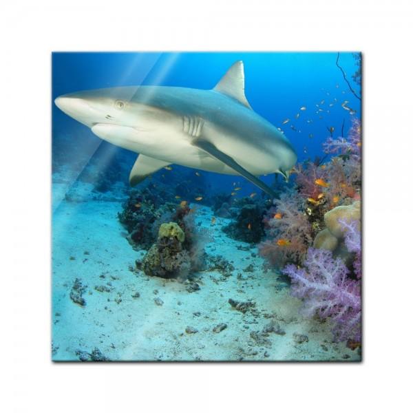 Glasbild - Hai