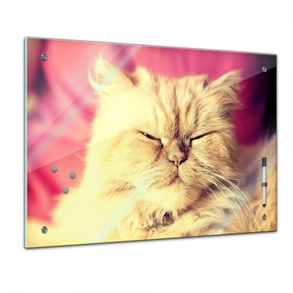 Memoboard - Tiere - Katze