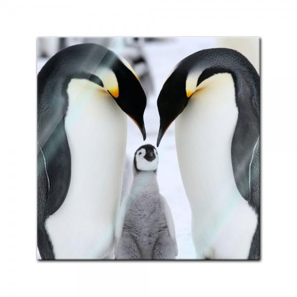 Glasbild - Pinguinfamilie