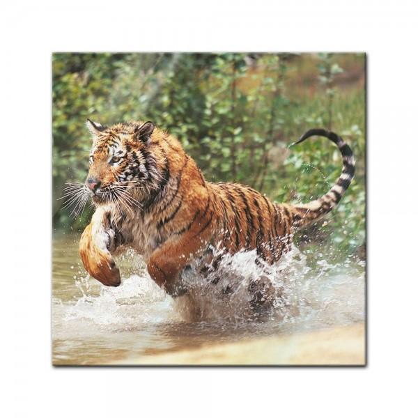 Glasbild - Tiger im Sprung
