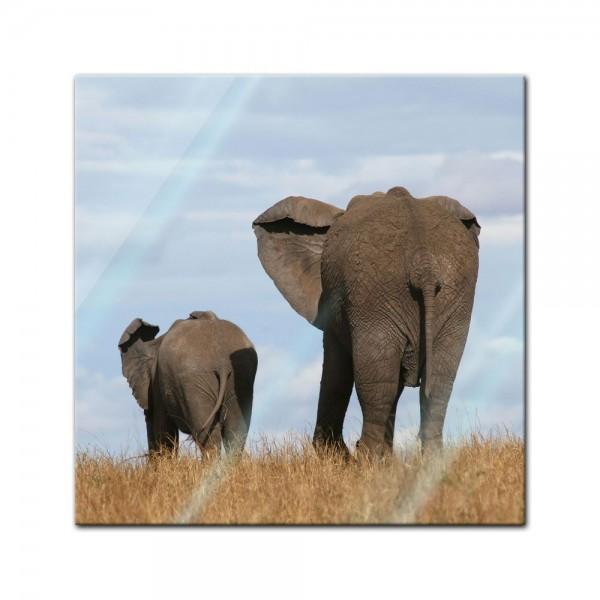 Glasbild - Elefantenmutter und Kind