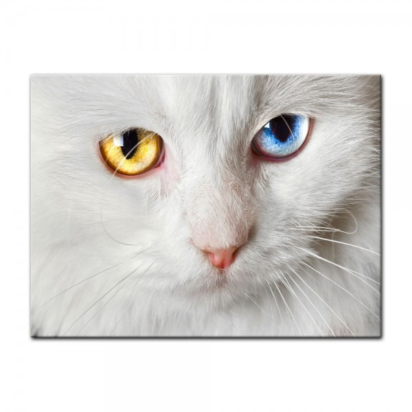 Leinwandbild - weiße Katze mit zwei Augenfarben