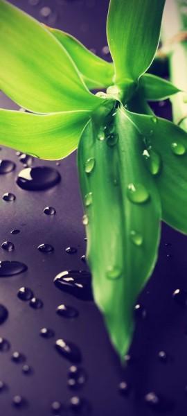Türtapete selbstklebend Frischer Bambus Vintage 90 x 200 cm Asien Bambus Pflanze Natur Gewächs
