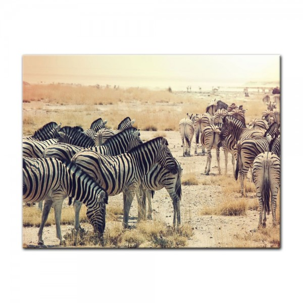 Leinwandbild - Zebras im Sonnenuntergang