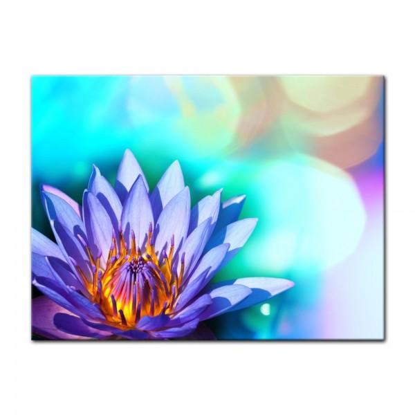 Leinwandbild - Lotusblüte II