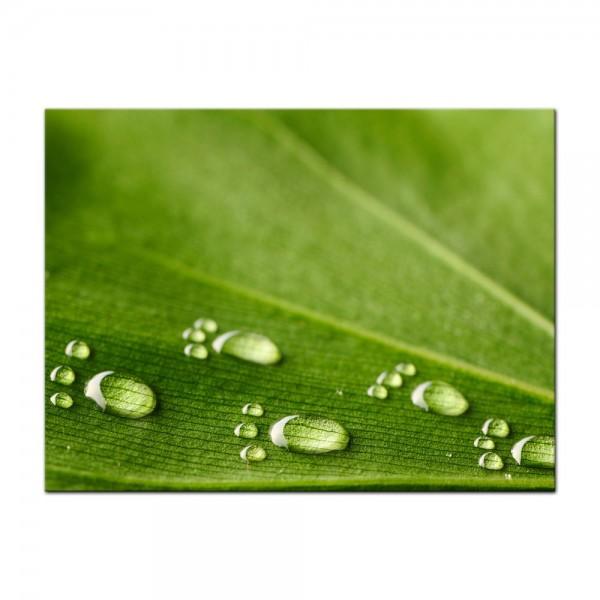 Leinwandbild - Wasserspuren auf einem Blatt