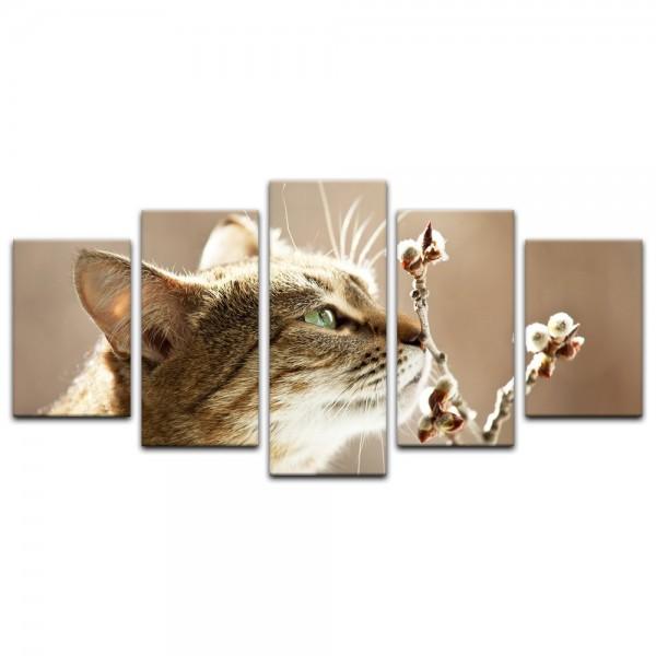 Leinwandbild - Katze