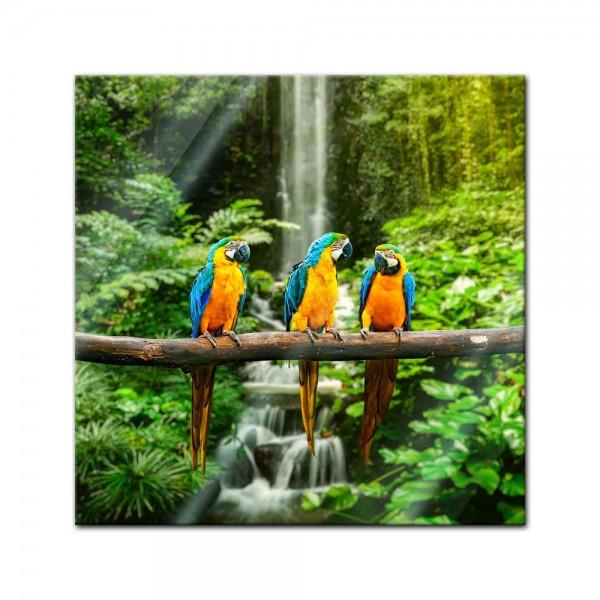 Glasbild - Blau-Gelber Macaw Papagei