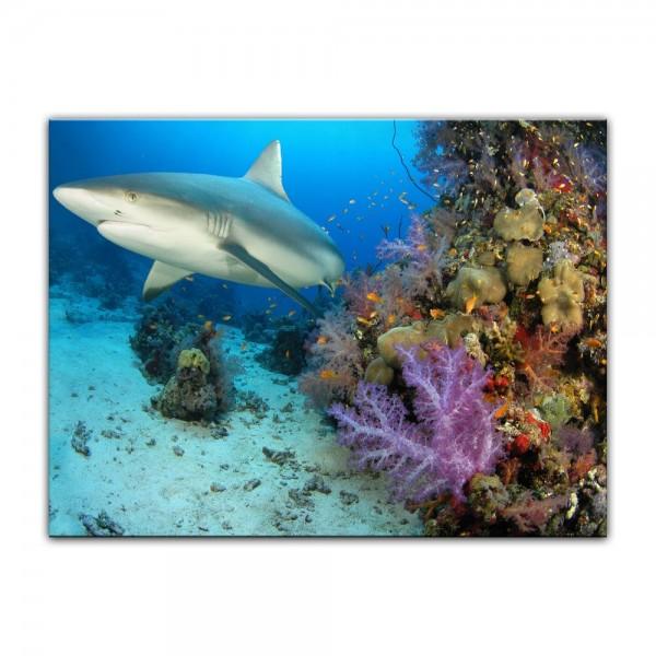 Leinwandbild - Hai