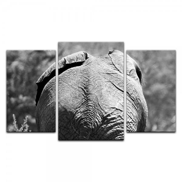 Leinwandbild - Elefant im Tarangire National Park,Tanzania