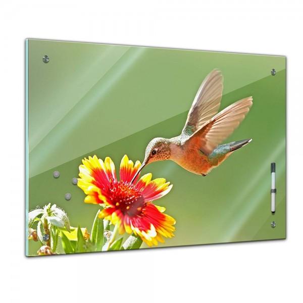 Memoboard - Tiere - Kolibri
