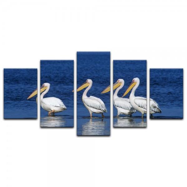 Leinwandbild - Pelikane