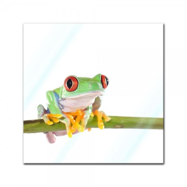 Glasbild - Rotaugenlaubfrosch