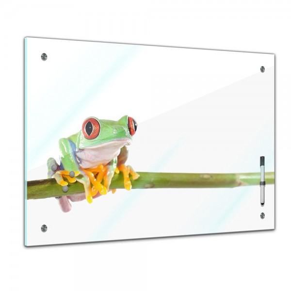 Memoboard - Tiere - Rotaugenlaubfrosch