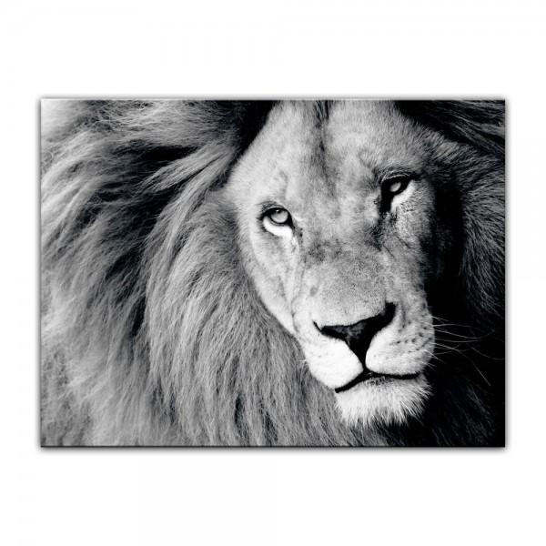 Leinwandbild - Löwe - sw