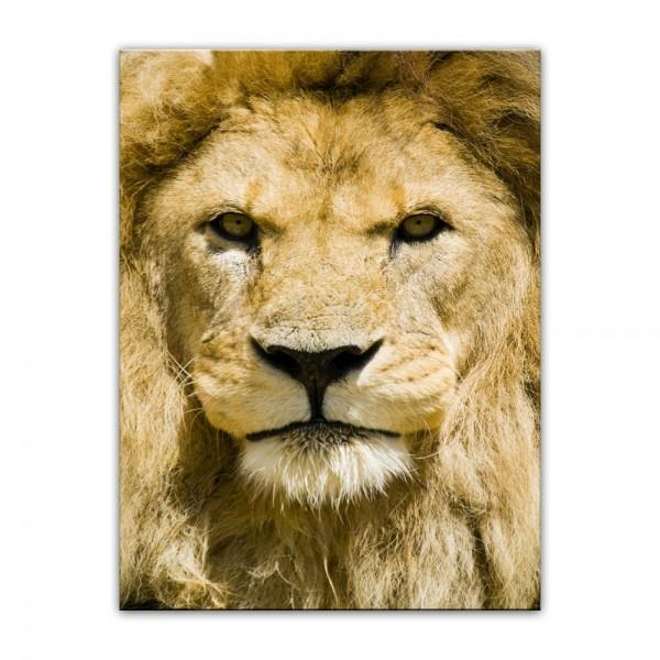 Leinwandbild - Löwe