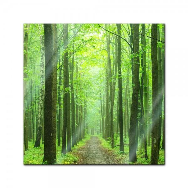 Glasbild - Waldweg