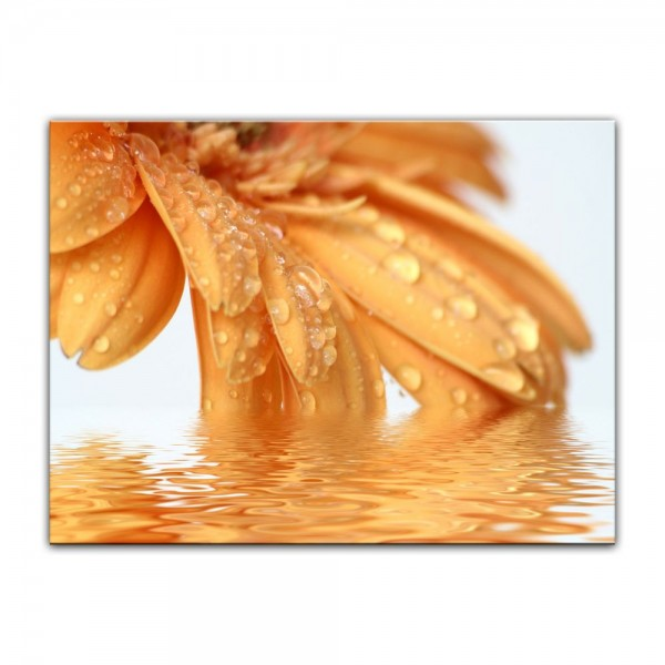 Leinwandbild - Gerbera in orange