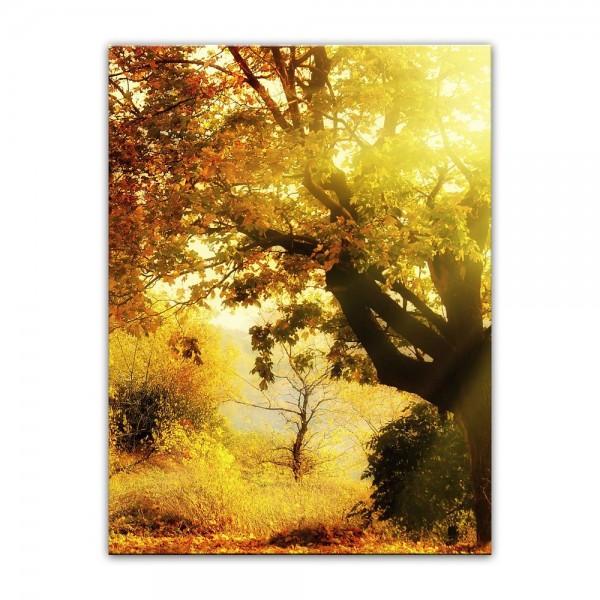 Leinwandbild - Herbstwald