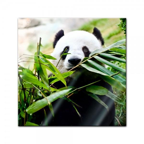 Glasbild - Pandabär
