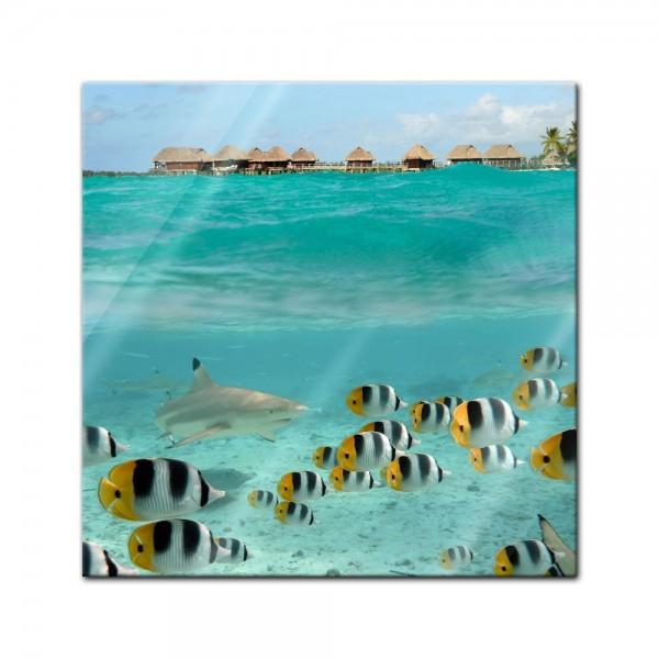 Glasbild - Hai und Fische in Bora Bora - Französisch-Polynesien