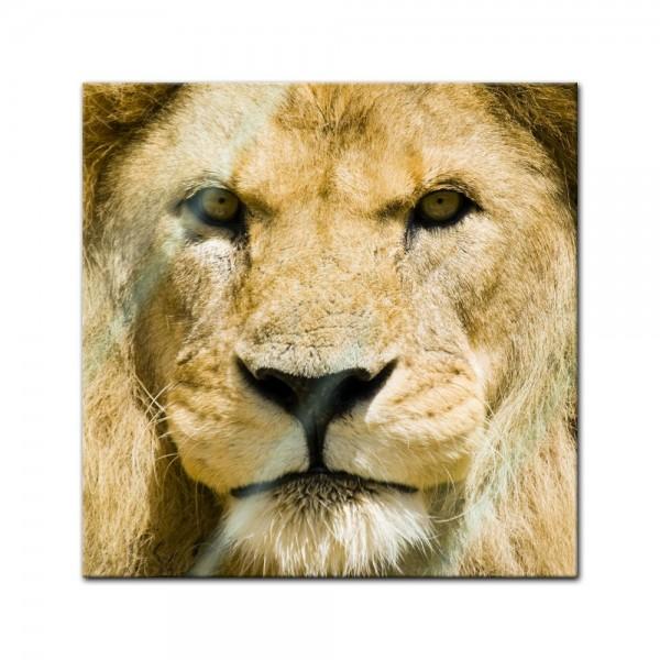 Glasbild - Löwe
