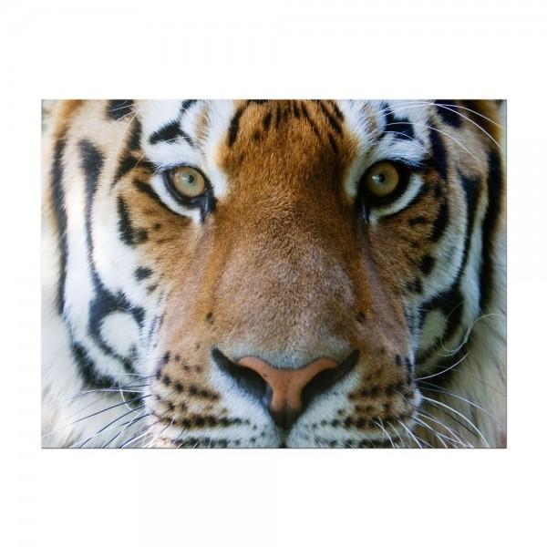 Leinwandbild - Tigergesicht