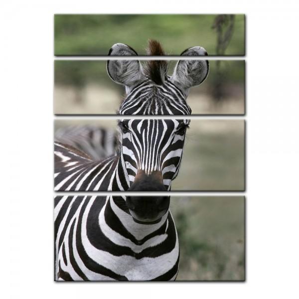 Leinwandbild - Zebra - Portrait