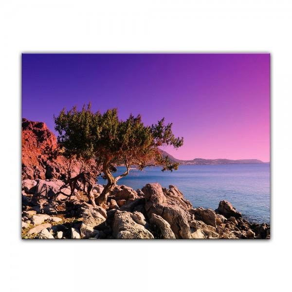 Leinwandbild - Mediterraner Baum auf Rhodos - Griechenland