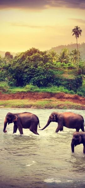 Türtapete selbstklebend Elefanten im Fluss Vintage 90 x 200 cm Elefant Sri Lanka Tropisch Nationalp