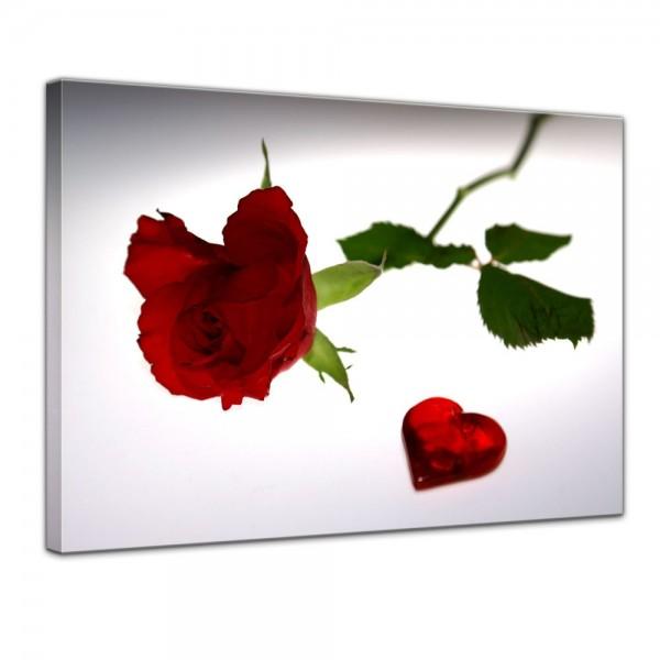SALE Leinwandbild - Rose mit Herz - 40x30 cm
