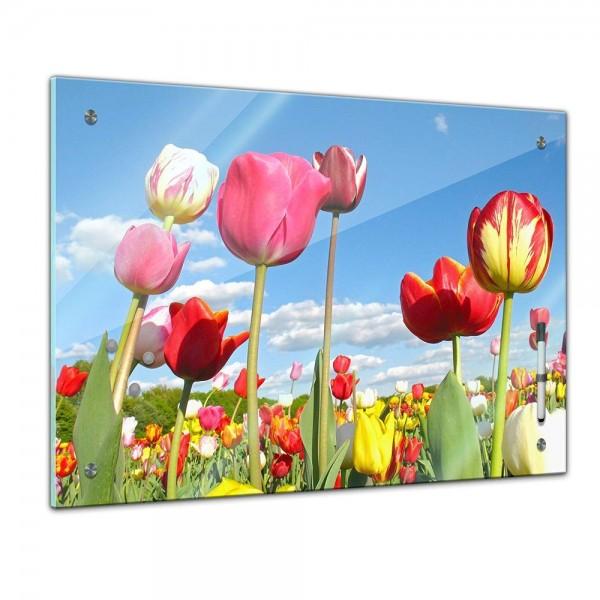 Memoboard - Pflanzen & Blumen - bunte Tulpen
