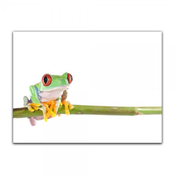 Leinwandbild - Rotaugenlaubfrosch