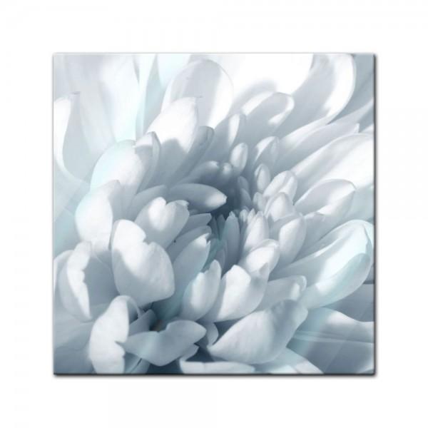 Glasbild - Weisse Chrysanteme