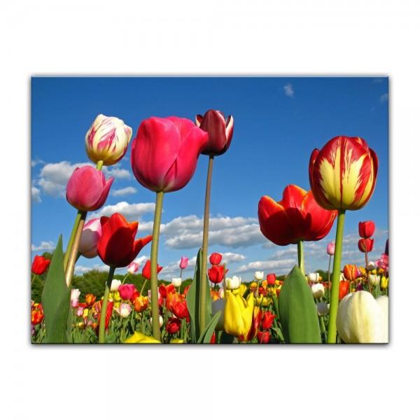 Leinwandbild - Tulpenbeet