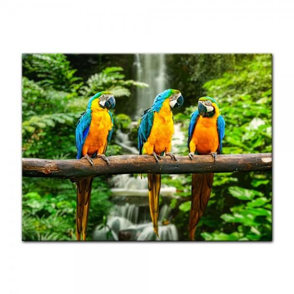 Leinwandbild - Blau-Gelber Macaw Papagei