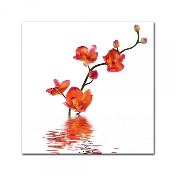 Leinwandbild - Orchidee im Wasser
