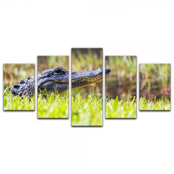 Leinwandbild - Alligator