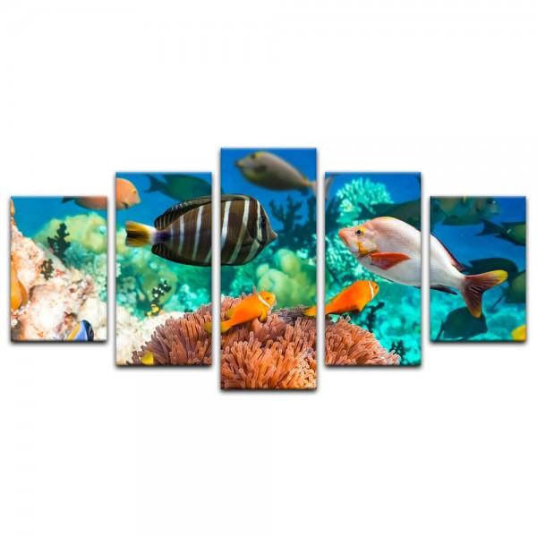 Leinwandbild - Unterwasserwelt