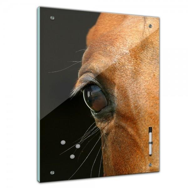 Memoboard - Tiere - Pferdeauge