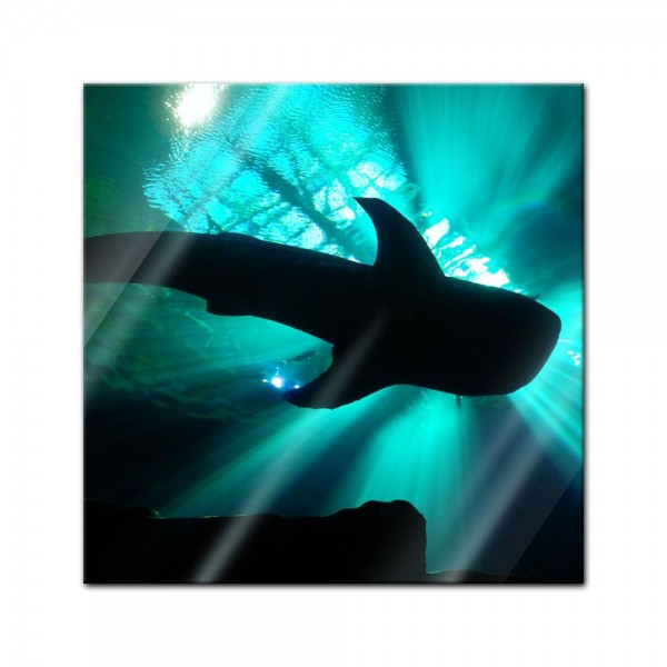 Glasbild - Hai II
