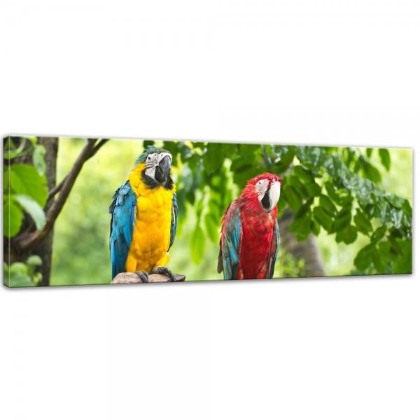 SALE Leinwandbild - Macaw Papageien - 160x50 cm