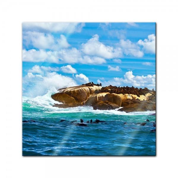 Glasbild - Südafrika Seal Island