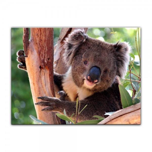 Leinwandbild - Koalabär