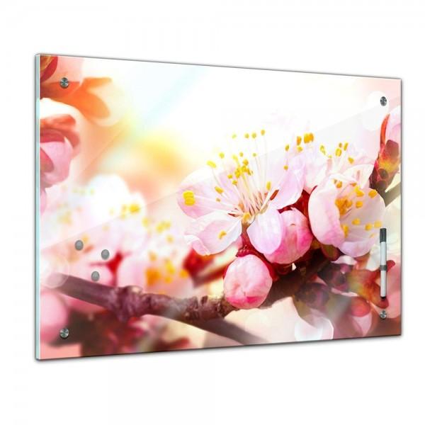 Memoboard - Pflanzen & Blumen - Aprikosenblüten