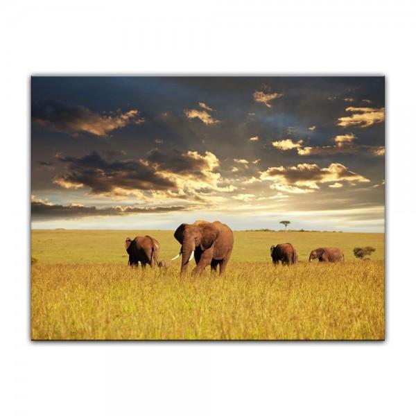 Leinwandbild - Elefanten